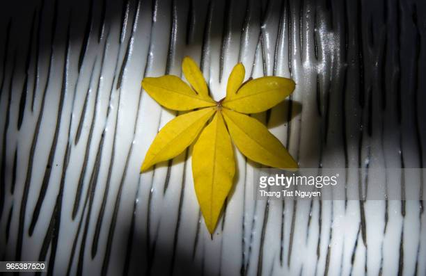 Yellow falling leaf on black & white background