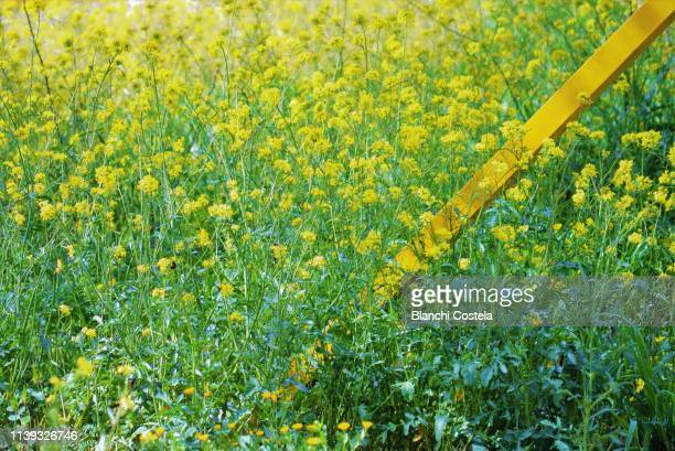 Yellow fence in the field in spring