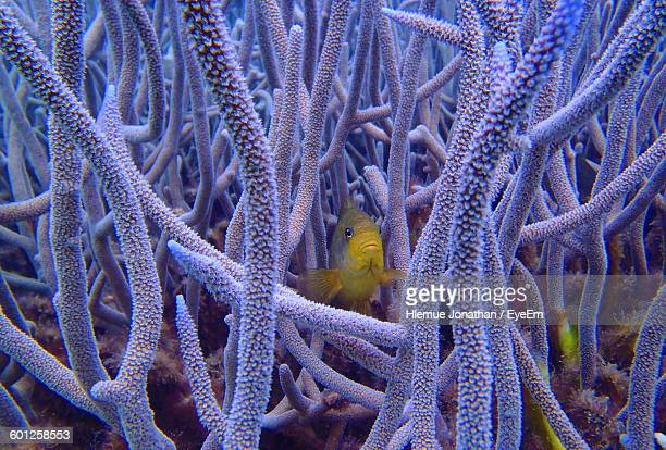 yellow fish swimming amidst coral - new caledonia stock photos and pictures
