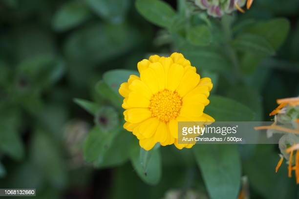 yellow flower and bottle green background - bottle green stock pictures, royalty-free photos & images