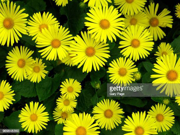 yellow flower backdrop - screen saver stock photos and pictures
