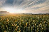 yellow flower field sunrise sky landscape