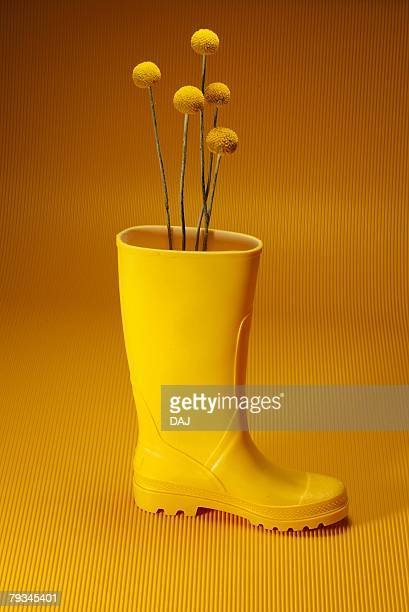 Yellow Flower Growing in Boot, Side View