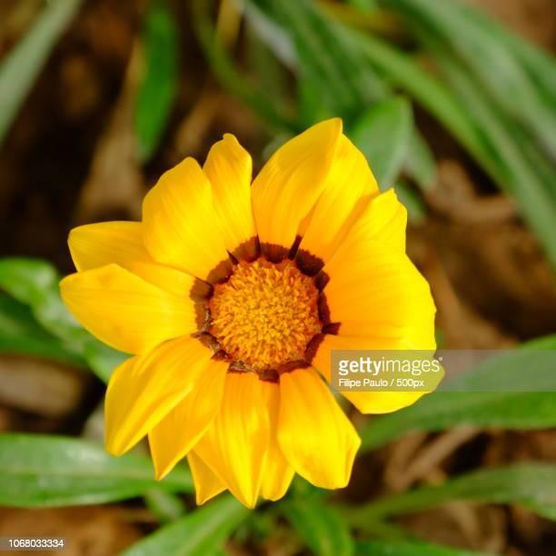 Yellow flower in full bloom