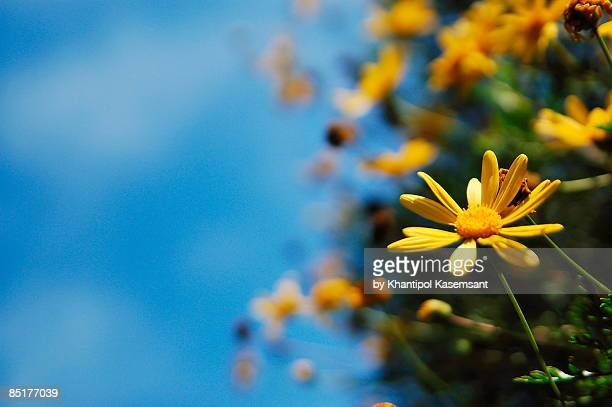 yellow flower on blue sky