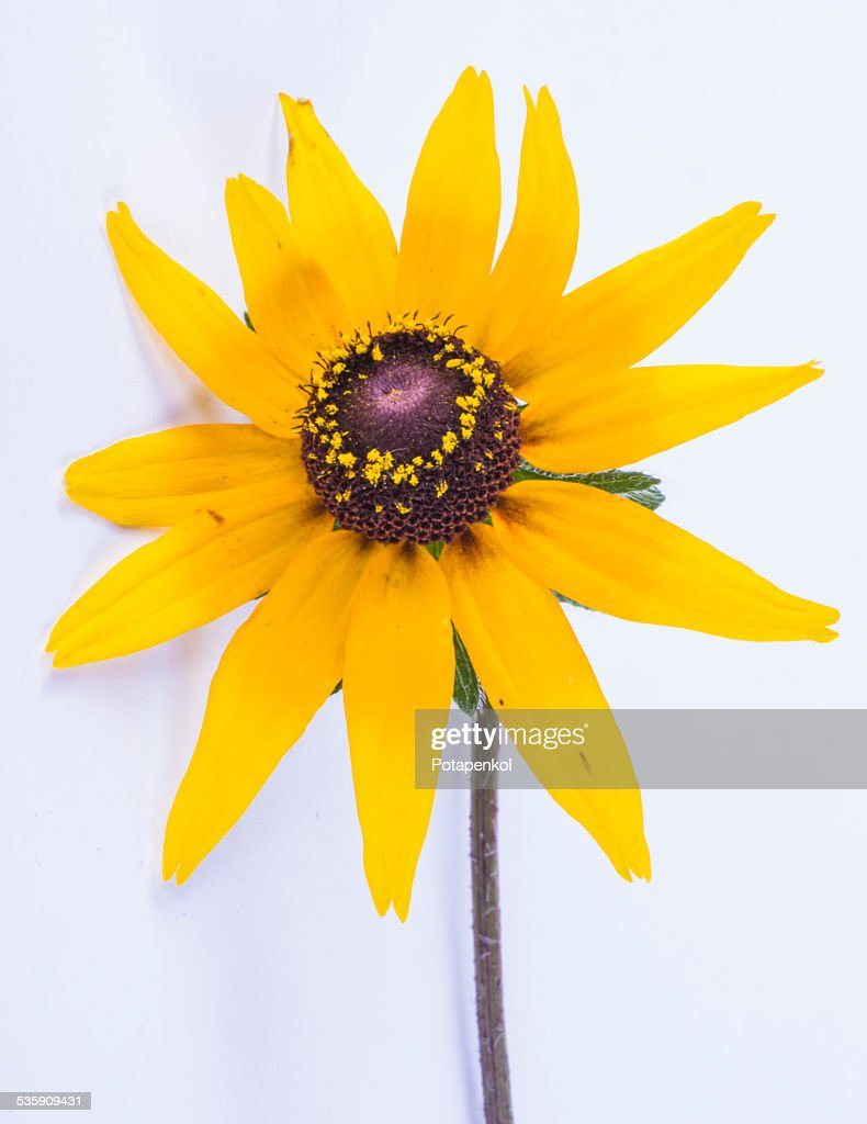 Yellow flower : Stock Photo