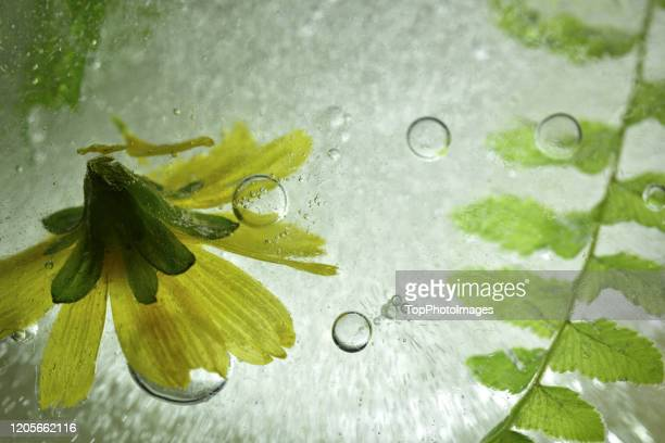 yellow flower sinking into clod water