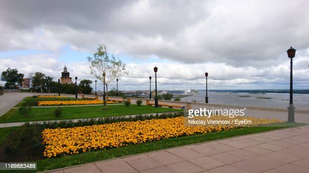 yellow flowering plants by street against sky - nizhny novgorod oblast stock photos and pictures