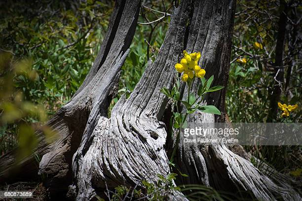 yellow flowers and trees on field - dave faulkner eye em stock pictures, royalty-free photos & images