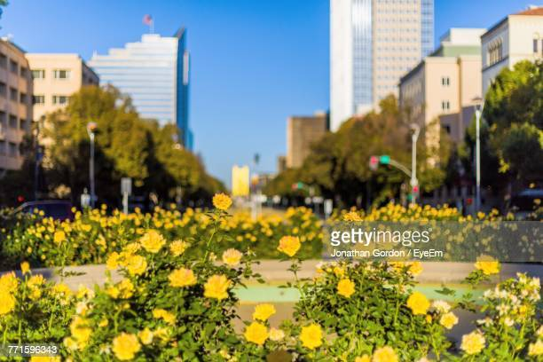 Yellow Flowers Blooming In City