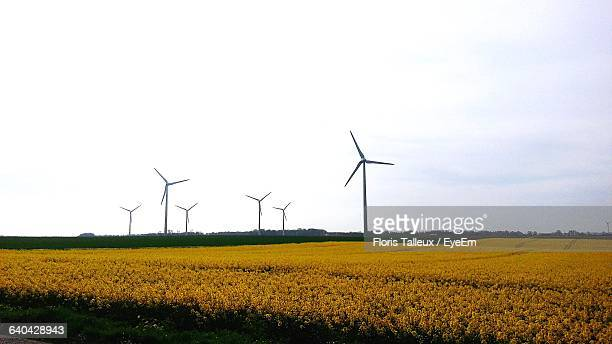 Yellow Flowers Blooming On Field With Wind Turbines Against Sky