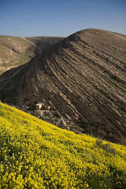 Yellow flowers contrast rock lines on hill above ancient village.