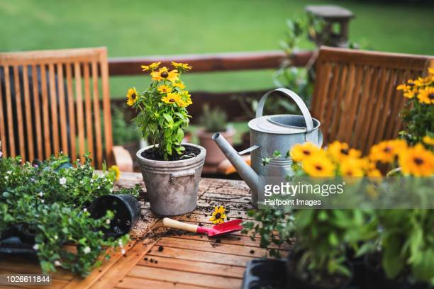 yellow flowers, flower pots and other gardening equipment on the wooden table. - blumentopf stock-fotos und bilder