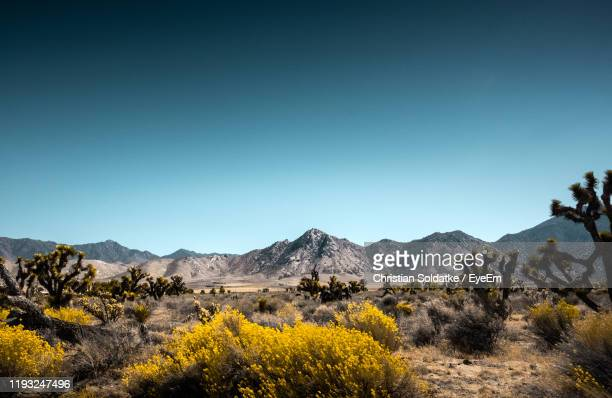 yellow flowers growing on land against sky - christian soldatke imagens e fotografias de stock