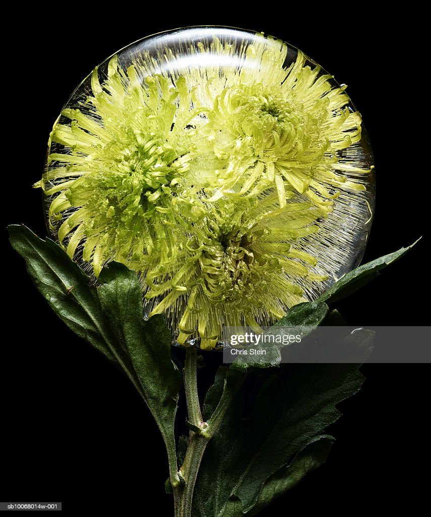 Yellow Flowers In Glass Ball Stock Photo Getty Images