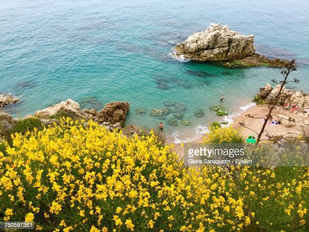 Yellow Flowers In Sea