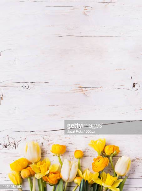 yellow flowers on a white wooden background copy space - tulips and daffodils stock pictures, royalty-free photos & images