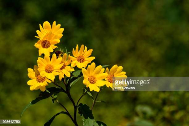 Yellow Flowers on a Windy Day