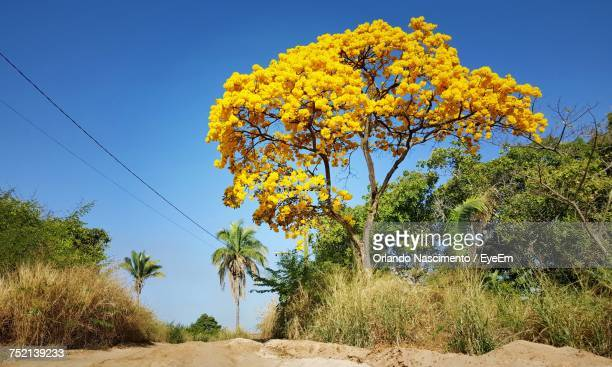 yellow flowers on landscape against blue sky - file:the_wyoming,_orlando,_fl.jpg stock pictures, royalty-free photos & images