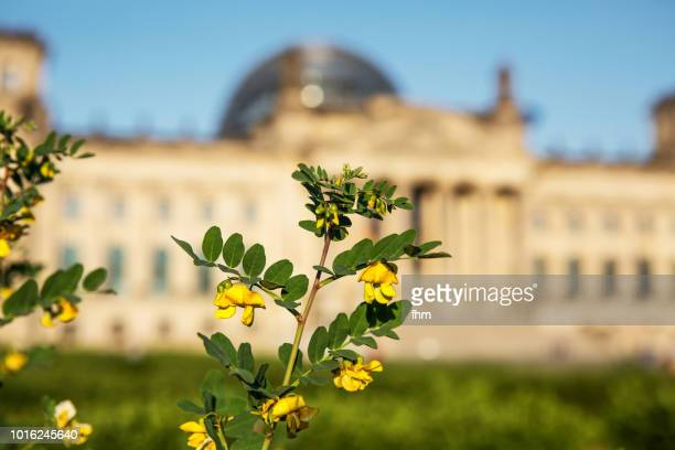 Yellow flowers with the Reichstag building (german parliament building) - Berlin, Germany