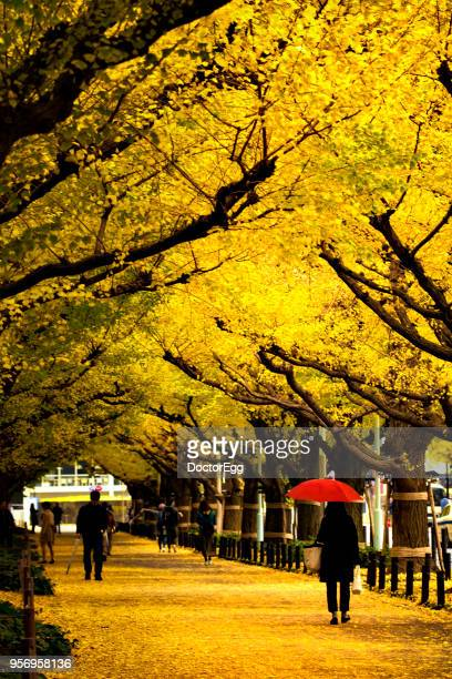 Yellow Ginkgo Tree Tunnels in Autumn at Aoyama Jingue Gaien, Near Aoyama Itchime Station, Japan