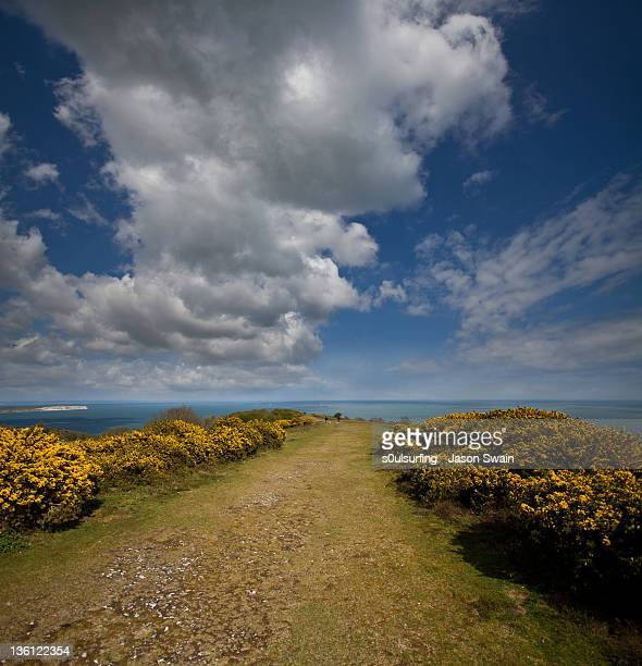 yellow gorse road - s0ulsurfing stock pictures, royalty-free photos & images