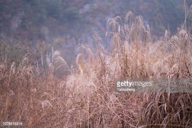 yellow grass and wild plants  in field,fall season element