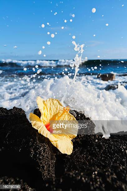 黄色いハイビスカスの花で囲んだ溶岩に広がる海の眺め