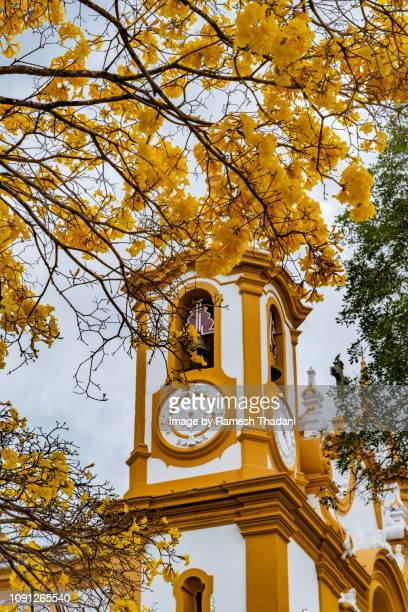 yellow ipe tree (handroanthus ochraceus) in front of a baroque church - handroanthus stock pictures, royalty-free photos & images