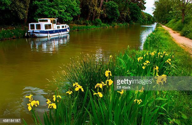 yellow iris border trail at the canal - canal du midi photos et images de collection