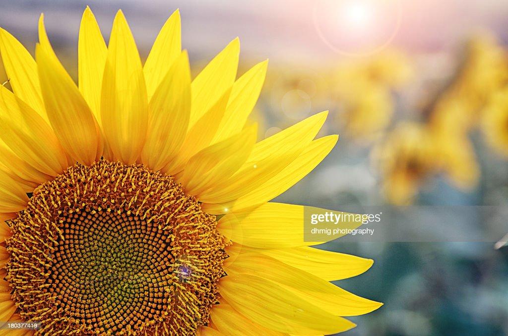 Yellow joy : Stock Photo