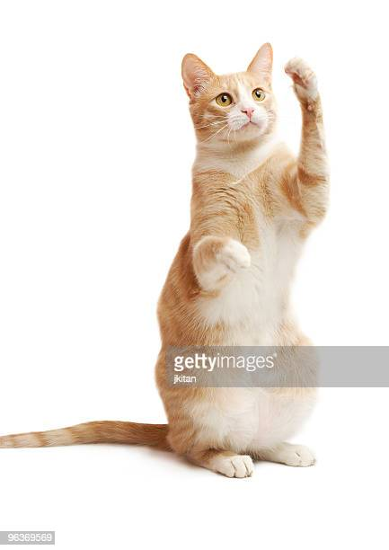 yellow kitten - paw stock pictures, royalty-free photos & images