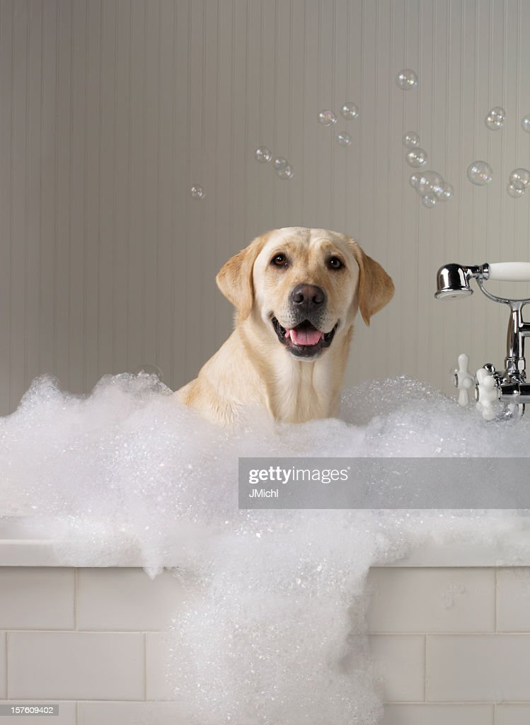Dog Grooming Simplified