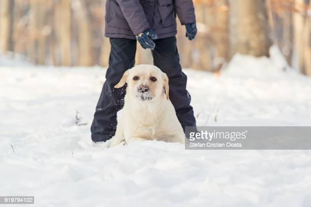 Yellow labrador sitting at human feet