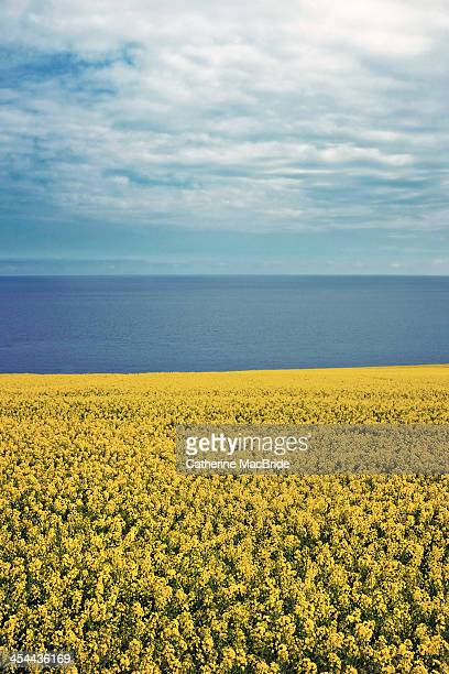 Yellow land and deep blue sea