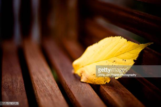 a yellow leaf lying on a wooden bench - november background stock photos and pictures