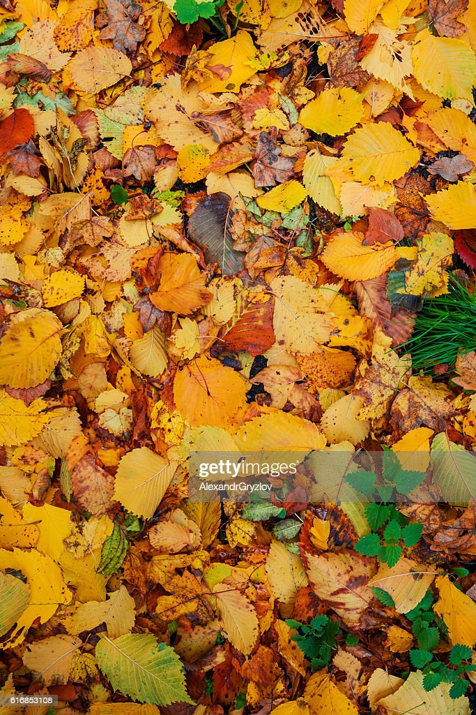 yellow leaf texture close up : Stock Photo