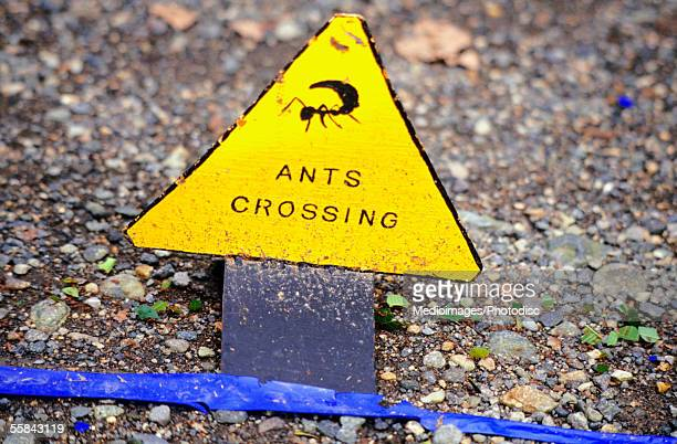yellow leafcutter ant sign on a road, costa rica - capital letter stock pictures, royalty-free photos & images