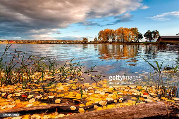 Yellow leafs drives on surface of lake