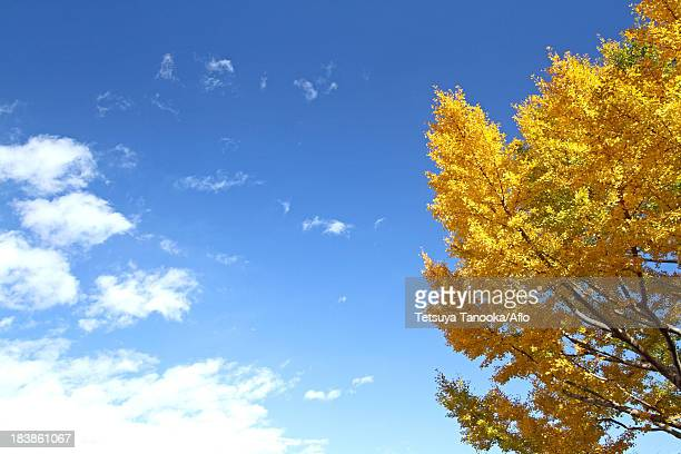 Yellow leaves and blue sky with clouds