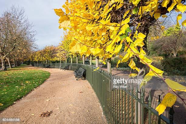 yellow leaves and curvy pathway. - ロンドン ハイドパーク ストックフォトと画像