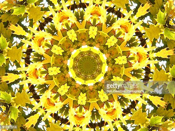 Yellow leaves in kaleidoscopic