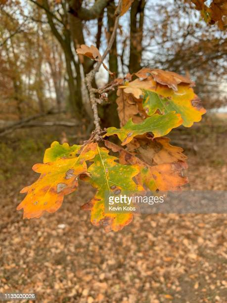yellow leaves on a tree. - wachstum stock pictures, royalty-free photos & images