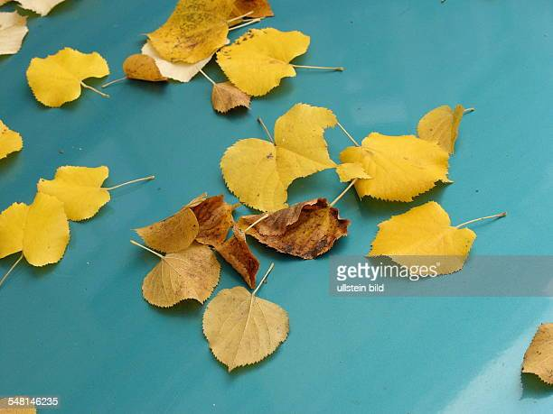 yellow leaves on a turquoise car in autumn