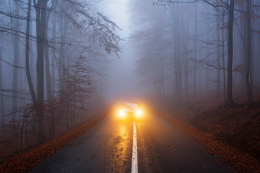 yellow light car into the forest - gettyimageskorea
