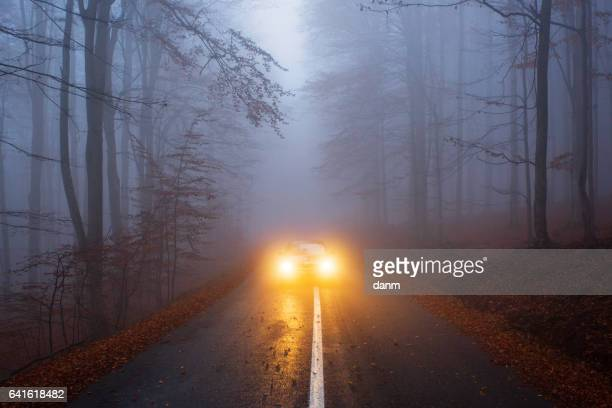 yellow light car into the forest