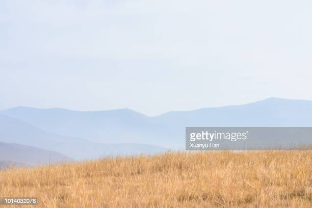 yellow meadow - hill stock pictures, royalty-free photos & images