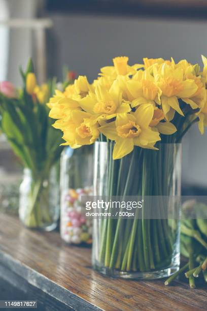 yellow narcissuses bouquet in a glass vase - tulips and daffodils stock pictures, royalty-free photos & images