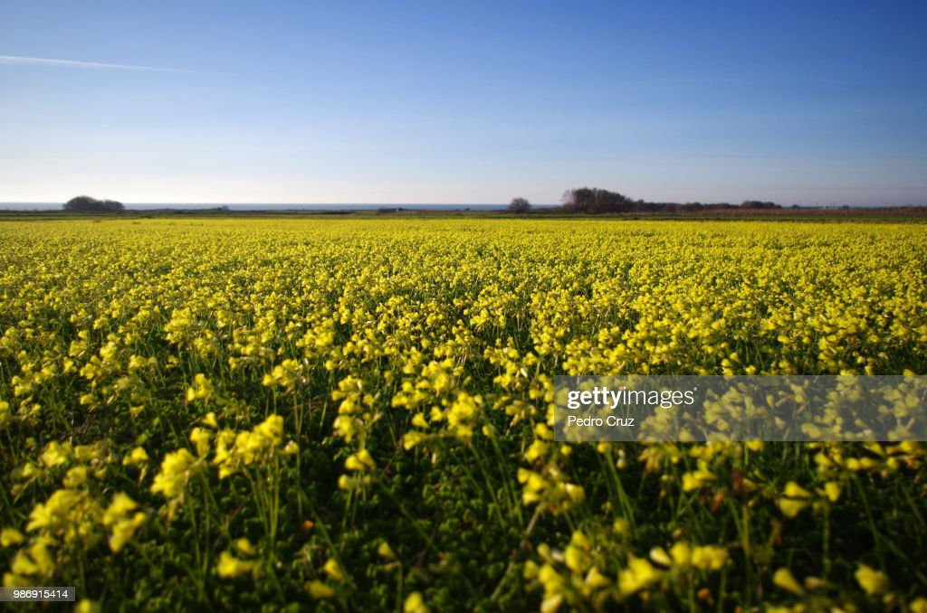 Yellow on blue : Stock Photo