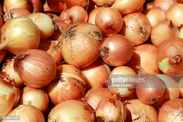 yellow onions for sale at the south station produce market in boston, massachusetts - onion stock pictures, royalty-free photos & images
